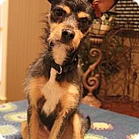 Adopt A Pet :: Murphy - Wytheville, VA