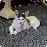Adopt A Pet :: Pilot - Ocala, FL