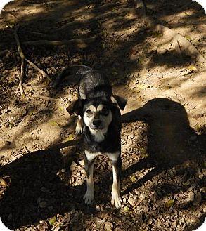 Husky Mix Dog for adoption in Fairmount, Georgia - Snow