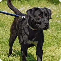 Adopt A Pet :: Ripple - Cincinnati, OH