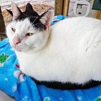 Adopt A Pet :: Levi - Odessa, FL