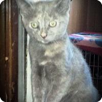 Adopt A Pet :: Cinnamon Toast - Fairborn, OH