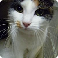 Adopt A Pet :: Annie - Hamburg, NY