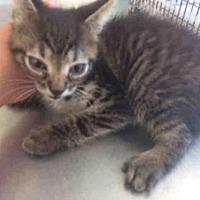Adopt A Pet :: A433362 - San Antonio, TX