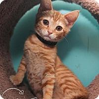 Adopt A Pet :: A..  Gareth - Charlotte, NC