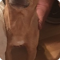 Adopt A Pet :: Buster (COURTESY POST) - Baltimore, MD