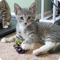 Adopt A Pet :: Dax - Carlisle, PA