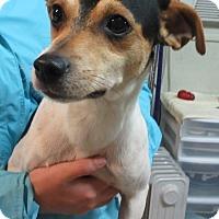 Adopt A Pet :: C1133    Buddy - Bay Springs, MS