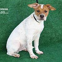 Adopt A Pet :: A095008 - Hanford, CA
