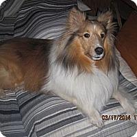 Adopt A Pet :: Darby - apache junction, AZ