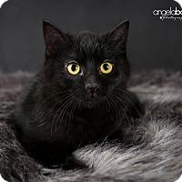 Adopt A Pet :: Blake - Eagan, MN