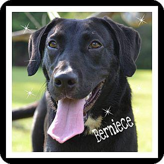 Labrador Retriever Mix Dog for adoption in Ocean Springs, Mississippi - Berneice