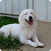Adopt A Pet :: Sampson - Hamburg, PA