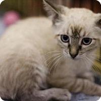 Adopt A Pet :: Sage - Sacramento, CA
