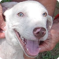 Adopt A Pet :: Vanna - Charleston, AR
