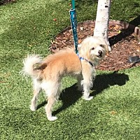 Adopt A Pet :: Tobias - Sacramento, CA