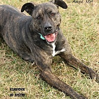 Adopt A Pet :: Elbridge - Camden, DE