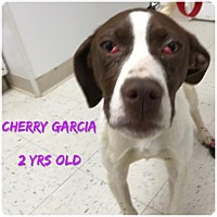 Adopt A Pet :: Cherry Garcia - DeSoto, IA