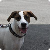 Adopt A Pet :: Lemoncake - Jackson, TN