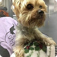 Adopt A Pet :: Maxx - Chicago Heights, IL
