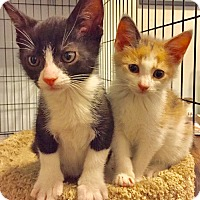 Adopt A Pet :: Fonzie and Pinkie are Perfect Playmates - Brooklyn, NY