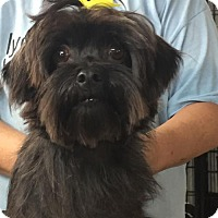 Adopt A Pet :: Scarlet - Alexandria, KY