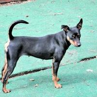 Adopt A Pet :: poketa - Wichita, KS