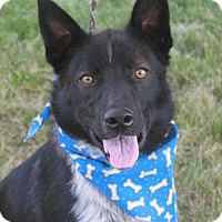 Adopt A Pet :: Tanner-PENDING - Garfield Heights, OH