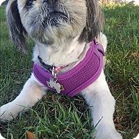 Adopt A Pet :: Sissy - La Mirada, CA
