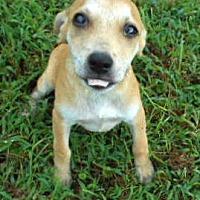 Adopt A Pet :: Huck - Allentown, NJ
