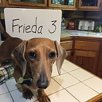 Adopt A Pet :: Frieda S. - Marcellus, MI