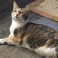 Adopt A Pet :: Miss Kitty - Tulsa, OK