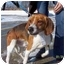 Photo 2 - Beagle Mix Dog for adoption in Plainfield, Illinois - Franklin