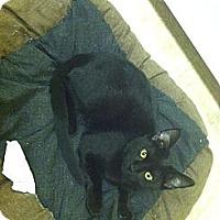 Adopt A Pet :: Shadow - Mobile, AL