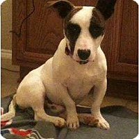 Adopt A Pet :: Brinkley - Arlington, TX