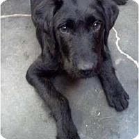 Adopt A Pet :: TN - Sullivan - Houston, TX
