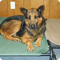 Adopt A Pet :: Wernher von Braun - Phoenix, AZ