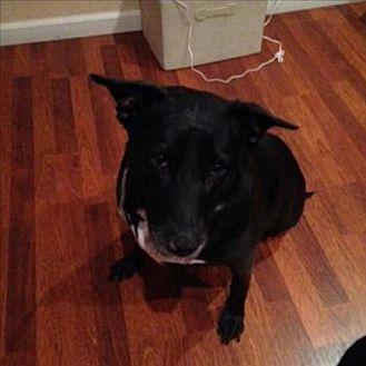 Terrier (Unknown Type, Medium)/Labrador Retriever Mix Dog for adoption in Dana Point, California - Pepper