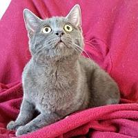 Adopt A Pet :: Butch - Lemoore, CA