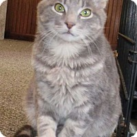 Adopt A Pet :: Tom - Norwich, NY