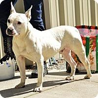 Adopt A Pet :: Spud - Lincolnton, NC