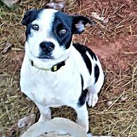 Adopt A Pet :: Cruz - Fredericksburg, VA