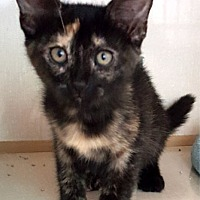 Adopt A Pet :: Carmella - Key Largo, FL