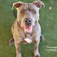 Adopt A Pet :: TRAVIESA - Los Angeles, CA