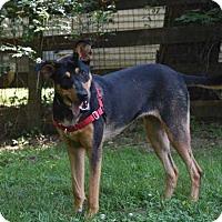 Adopt A Pet :: Nessie - Mebane, NC