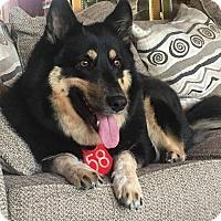 Adopt A Pet :: Molly - Greeneville, TN