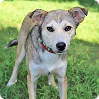 Feist Mix Dog for adoption in Washington, D.C. - PARKER