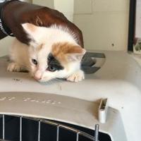 Adopt A Pet :: 8 cat house - West Monroe, LA