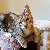 Adopt A Pet :: Oscar - Highland, IN