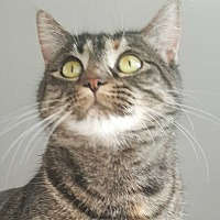 Adopt A Pet :: Ruby - McPherson, KS